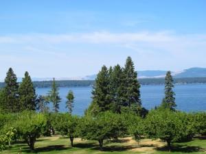 Flathead Lake Cherry Orchard sm