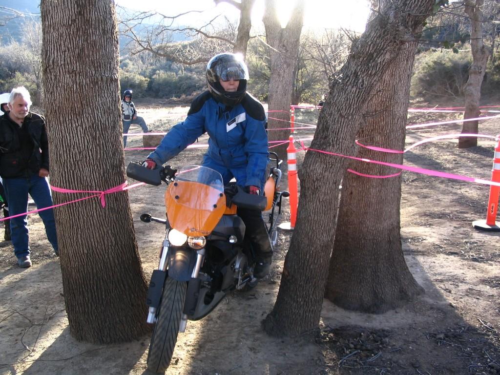 Leslie Prevish Final trees